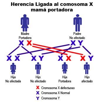 herencia-cromosoma-mama.jpg