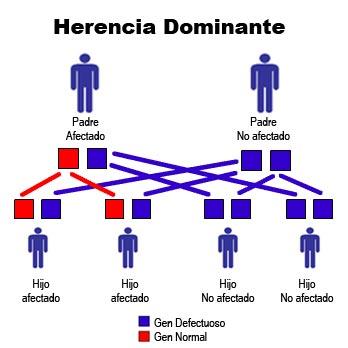herencia-dominante.jpg