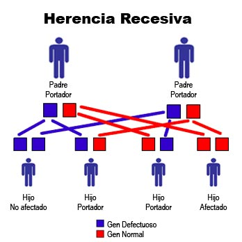 herencia-recesiva.jpg