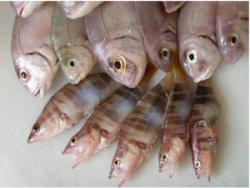 pescado-embarazo.jpg