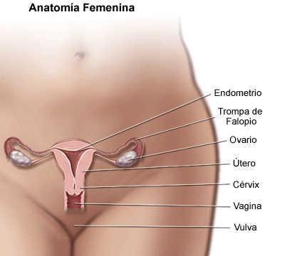 Embarazo ectópico: qué es, los riesgos y todo lo que debes saber ...
