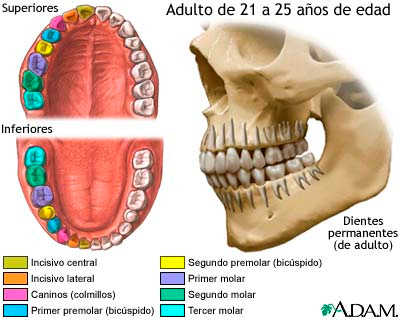 dientes-leche.jpg